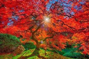 ragyogó őszi fa