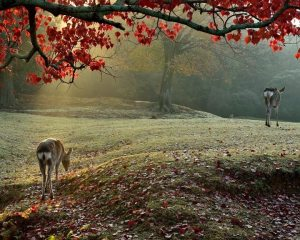 őszi erdő őzekkel
