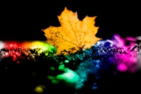 őszi napéjegy
