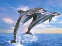 delfin kettő ugrik