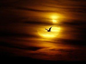napfogy, madárral