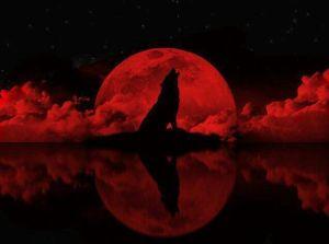 vörös holdf, farkas