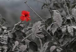 virág az őszben