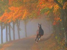 ősz, ló