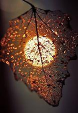 őszi telehold