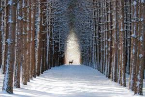 szarvas, téli táj