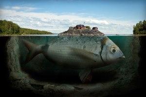 hal és épület